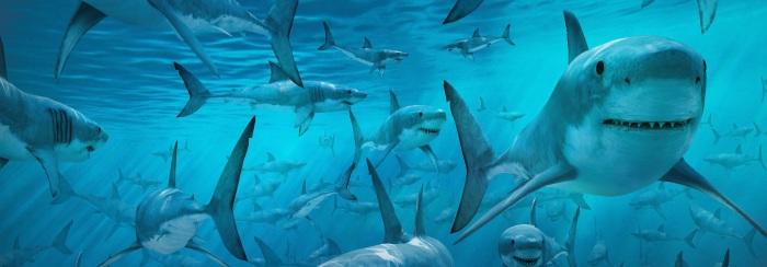 Shark_Frenzy_c2